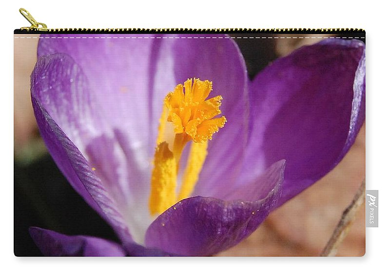 Digital Photography Carry-all Pouch featuring the photograph Purple Crocus by David Lane