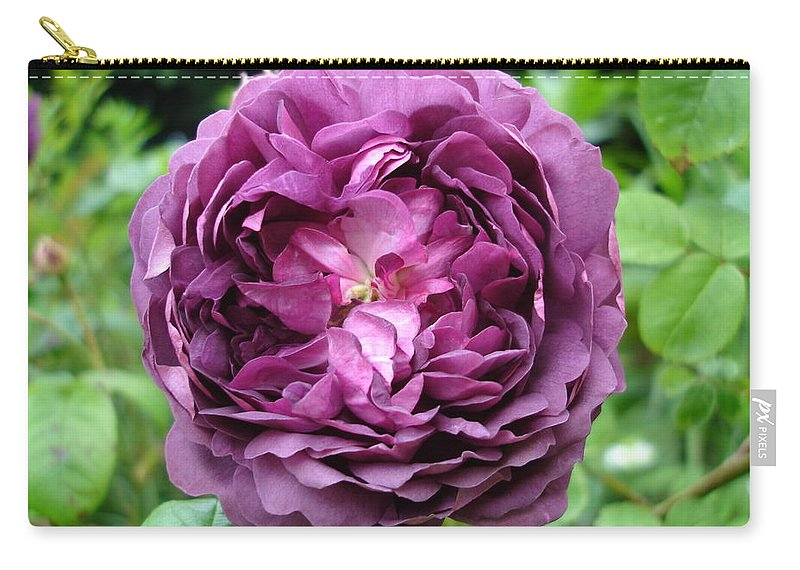 Rose Carry-all Pouch featuring the photograph Purple English Rose by Susan Baker