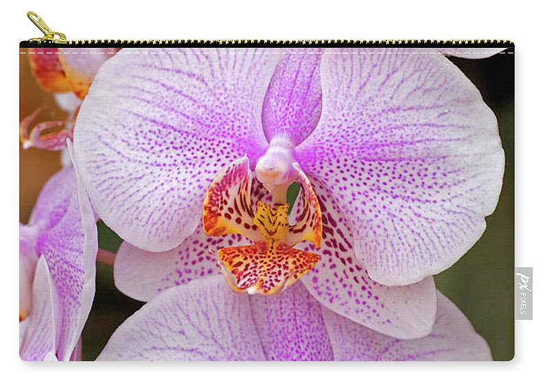 Psi Carry-all Pouch featuring the photograph Purple Orchid 1 by Ofer Zilberstein