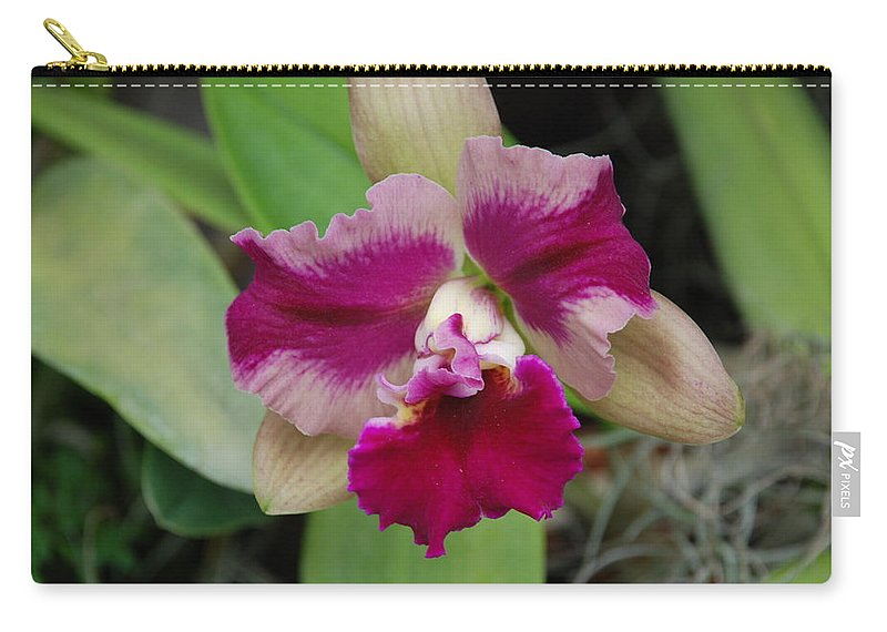 Macro Carry-all Pouch featuring the photograph Purple Orchid by Rob Hans
