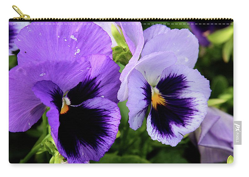 Flowers Carry-all Pouch featuring the photograph Purple Pansies by Toni Hopper