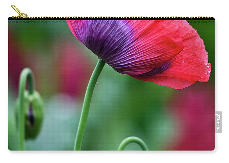 Poppy Carry-all Pouch featuring the photograph Purple Poppy Flower by Heiko Koehrer-Wagner