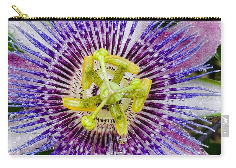 Passion Carry-all Pouch featuring the photograph Purple Radial by Christopher Holmes