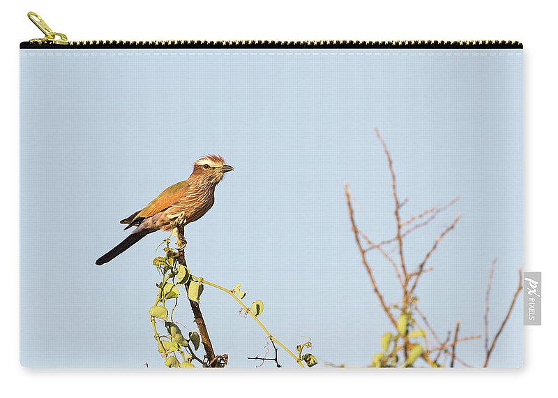 Purple Carry-all Pouch featuring the photograph Purple Roller by Alex Lapidus