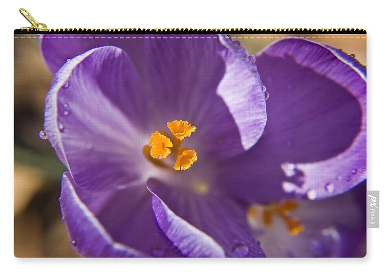 Crocus Carry-all Pouch featuring the photograph Purple Spring Crocus by Teresa Mucha