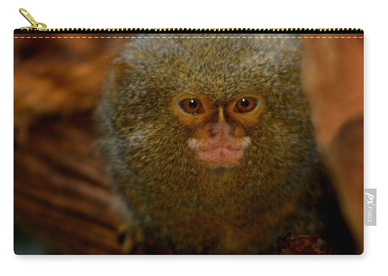 Pygmy Marmoset Carry-all Pouch featuring the photograph Pygmy Marmoset by Anthony Jones