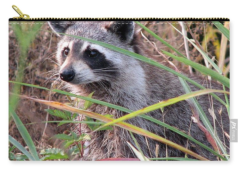 Raccoon Carry-all Pouch featuring the photograph Raccoon 2 by J M Farris Photography