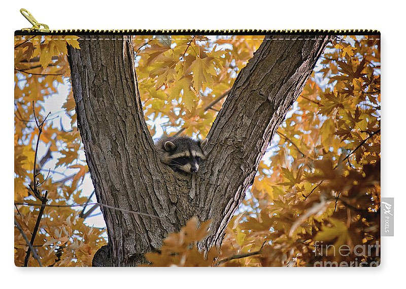 Raccoon Carry-all Pouch featuring the photograph Raccoon Nape by Karen Goodwin