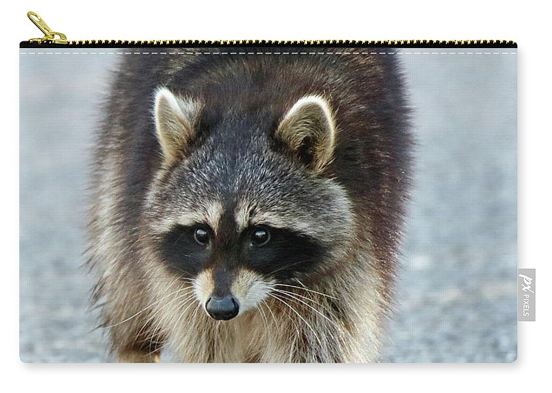 Raccoon Carry-all Pouch featuring the photograph Raccoon On The Prowl by Steve Gass