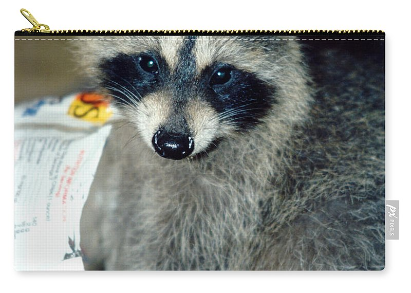 Faunagraphs Carry-all Pouch featuring the photograph Raccoon1 Snack Bandit by Torie Tiffany