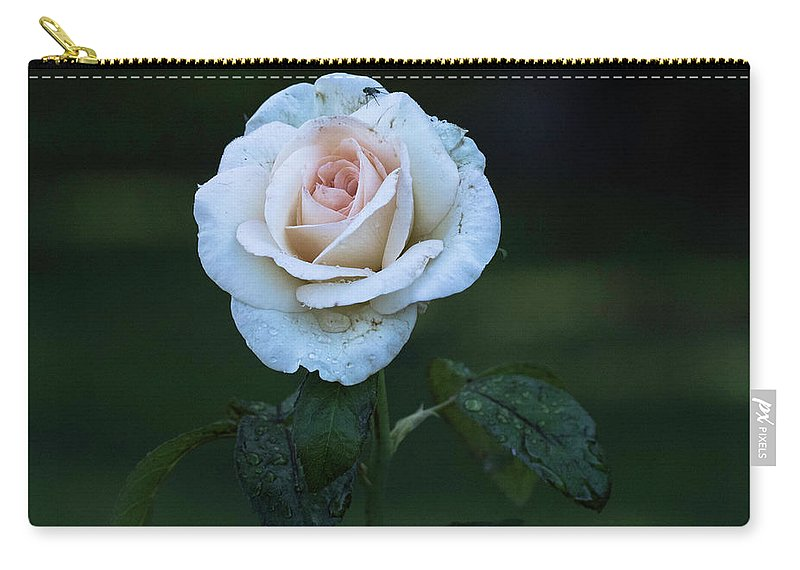 Flowers Carry-all Pouch featuring the photograph Rain Rose by Brent Bordelon
