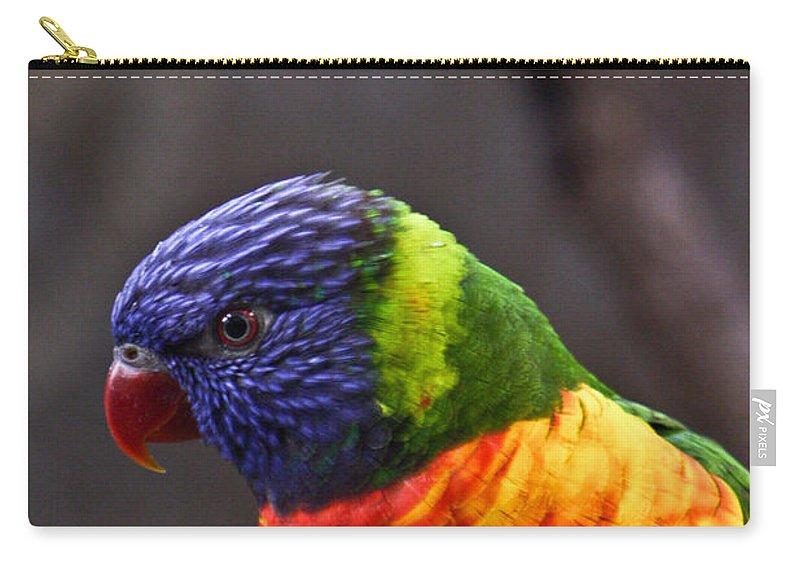 Bird Colorful Carry-all Pouch featuring the photograph Rainbow Lorikeet by Douglas Barnett