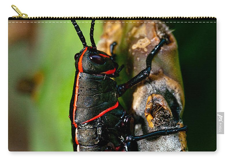 Insect Carry-all Pouch featuring the photograph Rally Striped by Christopher Holmes