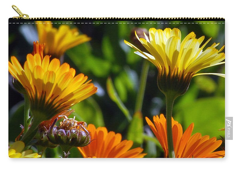 Flower Carry-all Pouch featuring the photograph Reach For The Sun 1 by Amy Fose
