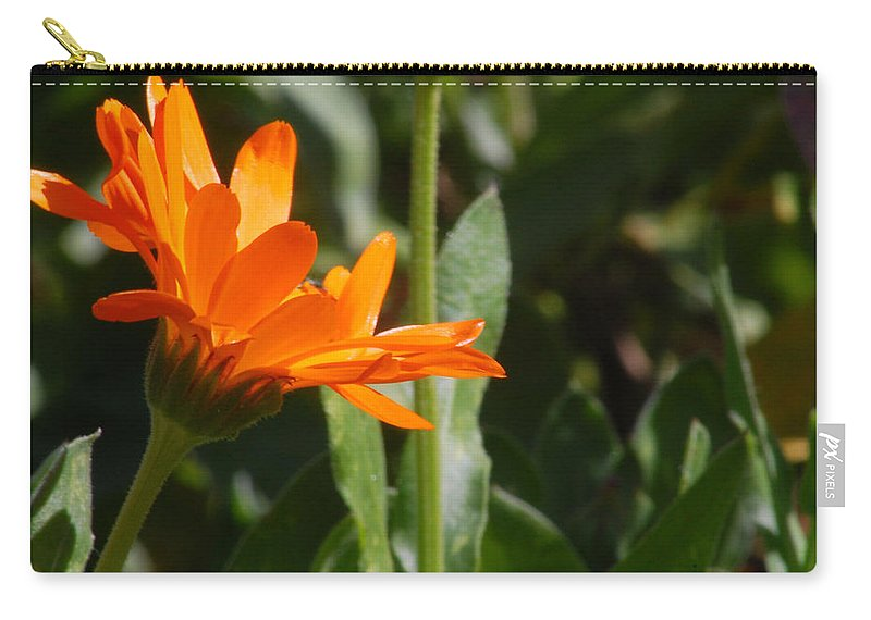 Orange Daisy Carry-all Pouch featuring the photograph Reach For The Sun 2 by Amy Fose