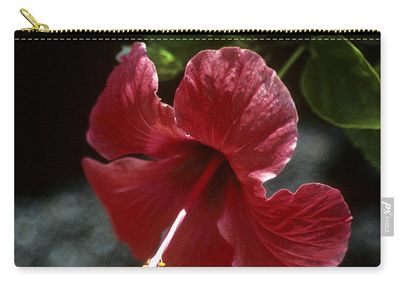 Orchid Carry-all Pouch featuring the photograph Ready For Picking by Gary Wonning