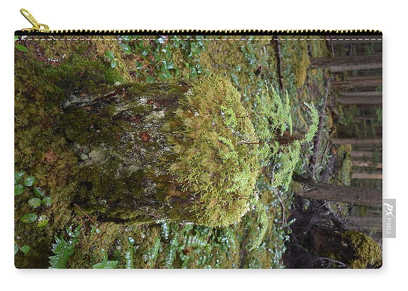Trees Carry-all Pouch featuring the photograph Recycle by Thomas Sexton