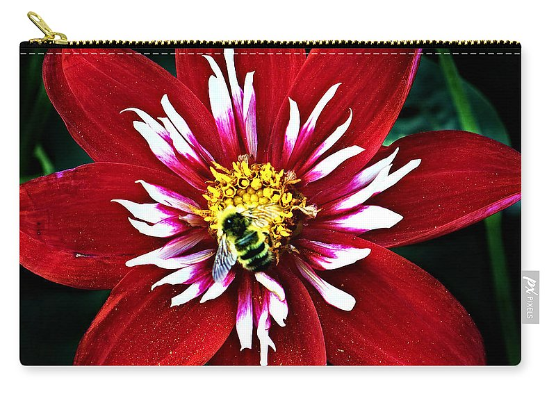 Flower Carry-all Pouch featuring the photograph Red And White Flower With Bee by Anthony Jones
