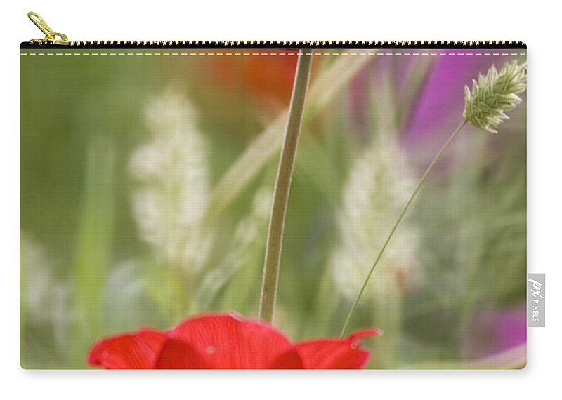 Red Carry-all Pouch featuring the photograph Red Anemone Coronaria In Nature by Ofer Zilberstein