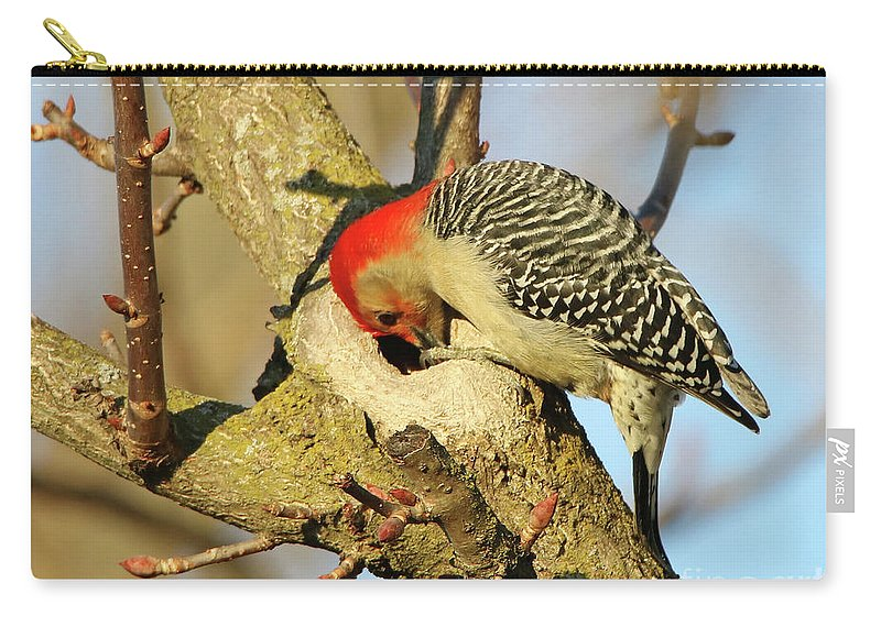 Bird Carry-all Pouch featuring the photograph Red Bellied Woodpecker by Steve Gass