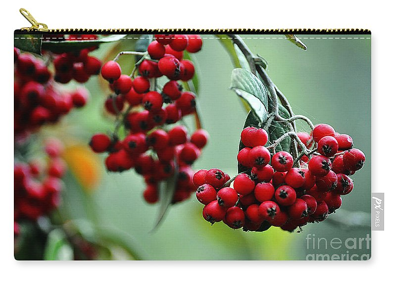 Clay Carry-all Pouch featuring the photograph Red Berries by Clayton Bruster