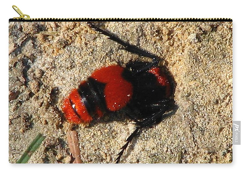 Insect Carry-all Pouch featuring the photograph Red Burrowing Insect by J M Farris Photography