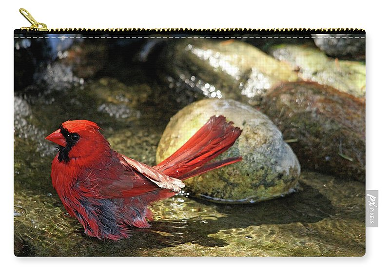 Northern Red Cardinal Carry-all Pouch featuring the photograph Red Cardinal Bathing by Debbie Oppermann