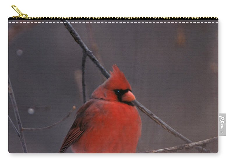 Birds Carry-all Pouch featuring the photograph Red Cardinal by John Harmon