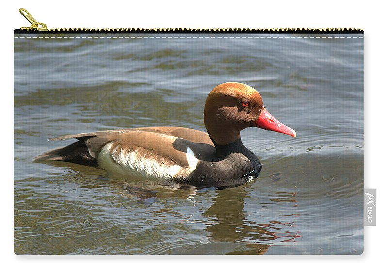 Pochard Carry-all Pouch featuring the photograph Red-crested Pochard by Chris Day