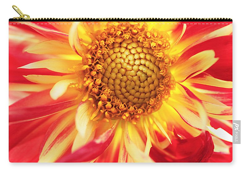 Red Dahlia Carry-all Pouch featuring the photograph Red Dahlia Flower by Neil Overy