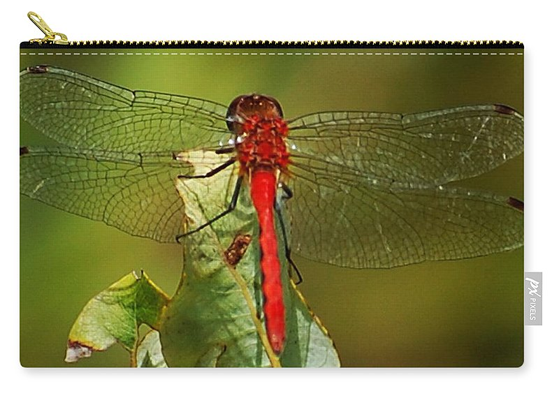 Digital Photograph Carry-all Pouch featuring the photograph Red Dragon Fly by David Lane