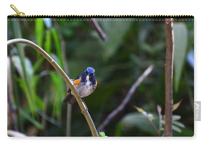 Red-flanked Carry-all Pouch featuring the photograph Red-flanked Bluetail 2 by David Hohmann