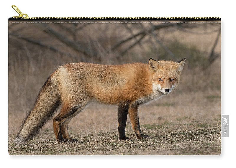 Red Fox Carry-all Pouch featuring the photograph Red Fox by George DeCamp
