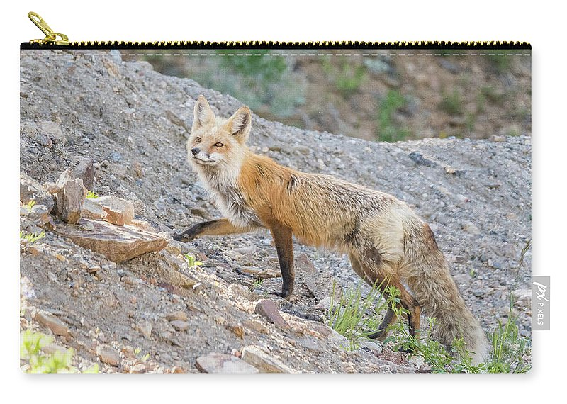 Fox Carry-all Pouch featuring the photograph Red Fox Vixen Looking For Prey by Tony Hake