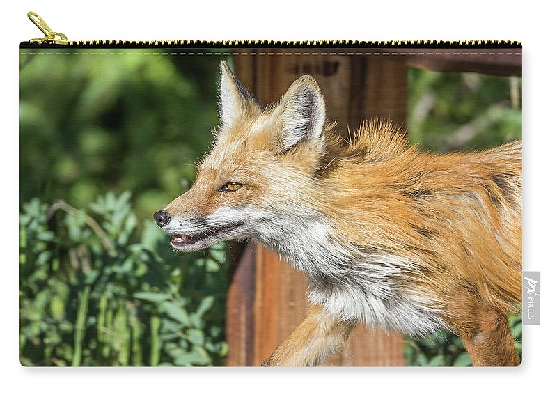 Fox Carry-all Pouch featuring the photograph Red Fox Vixen On The Hunt by Tony Hake