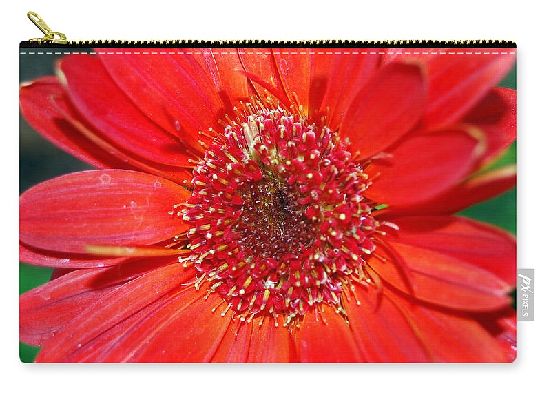 Gerber Carry-all Pouch featuring the photograph Red Gerber Daisy by Amy Fose