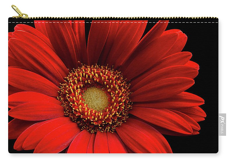Red Carry-all Pouch featuring the photograph Red Gerbera by Darlene Munro