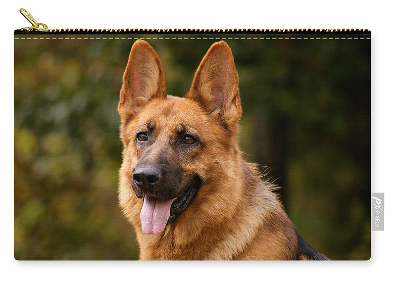 German Shepherd Carry-all Pouch featuring the photograph Red German Shepherd Dog by Sandy Keeton