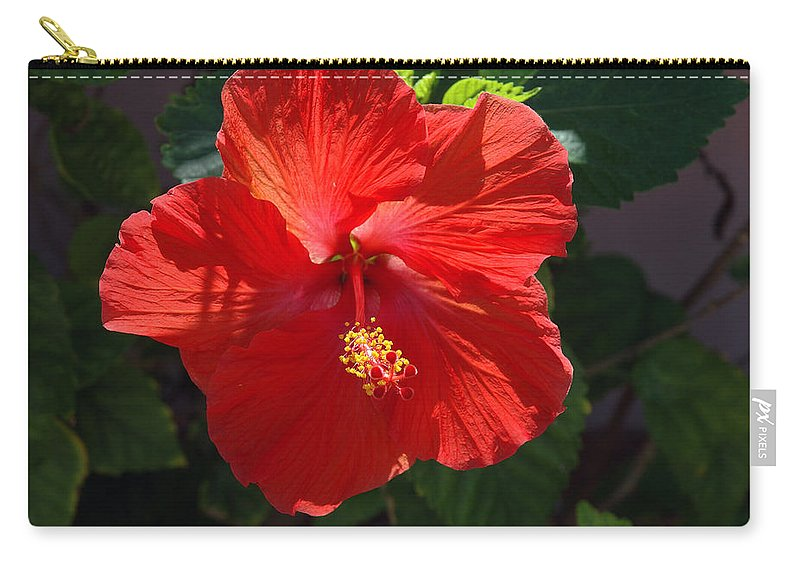 Photography Carry-all Pouch featuring the photograph Red Hibiscus by Susanne Van Hulst