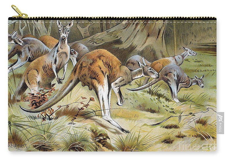Artcom Carry-all Pouch featuring the photograph Red Kangaroo by Granger