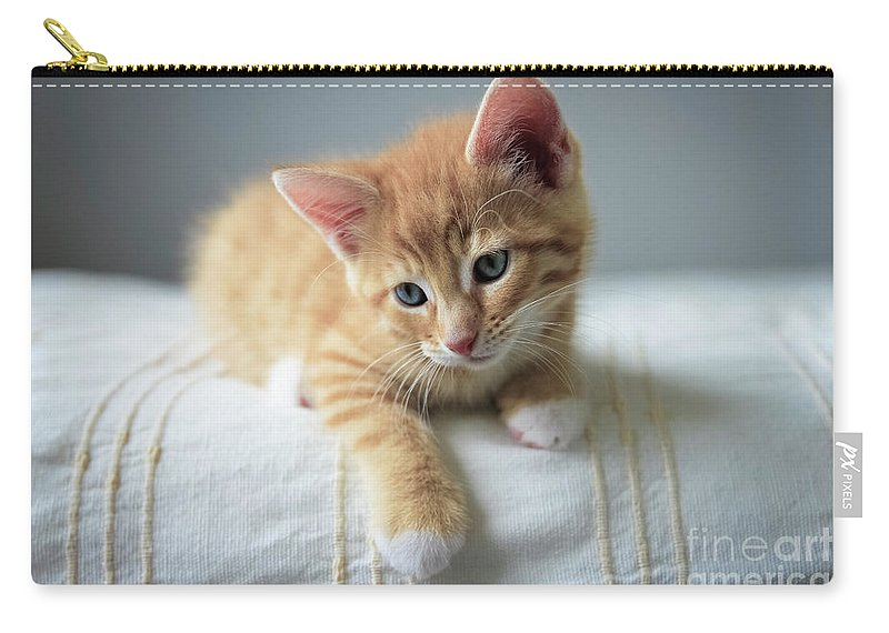 Animal Carry-all Pouch featuring the photograph Red Kitten On A Beige Blanket by Tetyana Ustenko