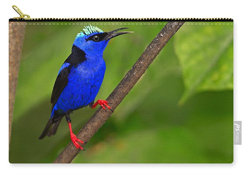 Red-legged Honeycreeper Carry-all Pouch featuring the photograph Red-legged Honeycreeper by Tony Beck