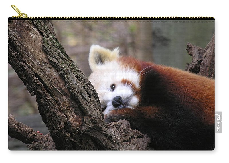 Red Carry-all Pouch featuring the photograph Red Panda by Diane Greco-Lesser