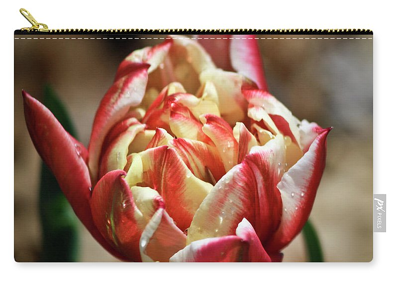 Red Carry-all Pouch featuring the photograph Red Peony Tulip by Teresa Mucha
