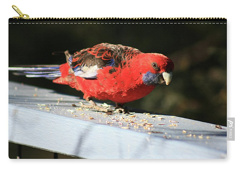 Red Rosella Carry-all Pouch featuring the photograph Red Rosella by Douglas Barnard