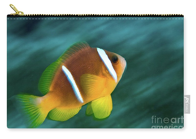 Red Sea Carry-all Pouch featuring the photograph Red Sea Clownfish by Hagai Nativ