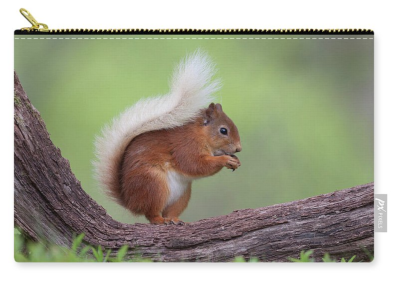 Red Carry-all Pouch featuring the photograph Red Squirrel Curved Log by Peter Walkden