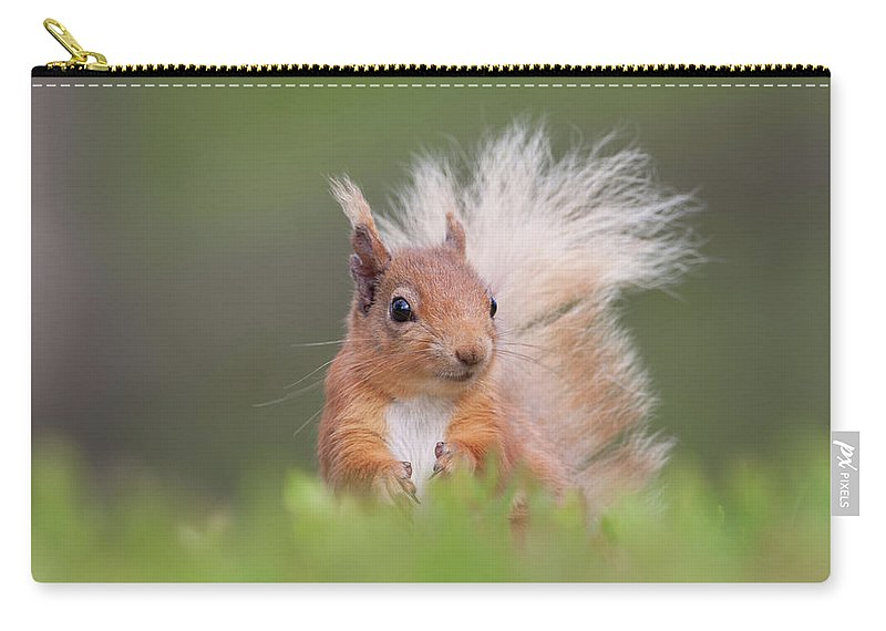 Red Carry-all Pouch featuring the photograph Red Squirrel In Vegetation by Peter Walkden