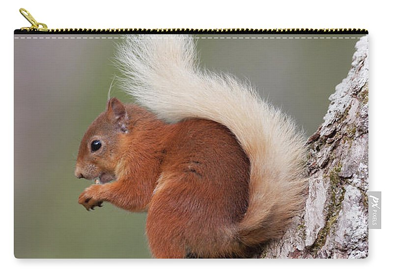 Red Carry-all Pouch featuring the photograph Red Squirrel On Tree by Peter Walkden