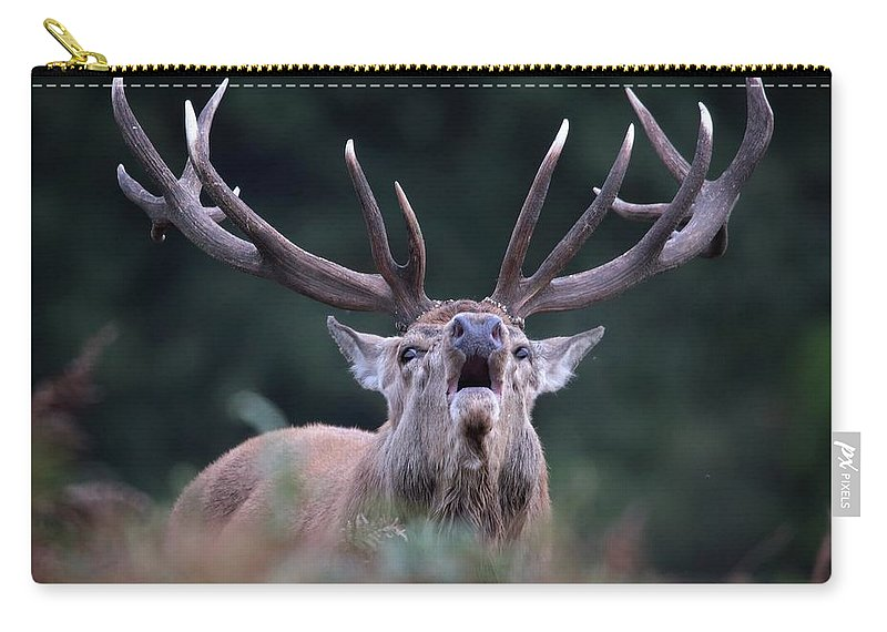 Bellowing Carry-all Pouch featuring the photograph Red Stag by Ceri Jones